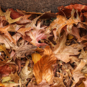 crisp by Katsuhiro Kaneko - Nature Up Close Leaves & Grasses ( canon, fall foliage, nyc, new york, central park, fallen leaves, ny, fall leaves on ground, fall leaves, eos, autumn flakes, stairs, bethesda terrace, season, autumn, fall, new york city )