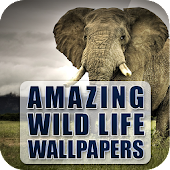Amazing Wildlife Wallpapers