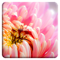 Abstract Glowing Flower LWP icon