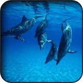 Love Dolphin Wallpapers