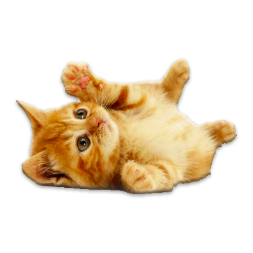 Cute Kittens HD LOGO-APP點子