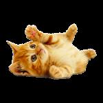 Cute Kittens HD