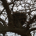 Bird nest- unknown species