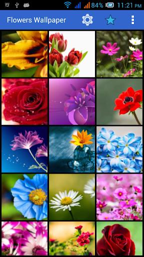 صور وخلفيات زهور HD 2014