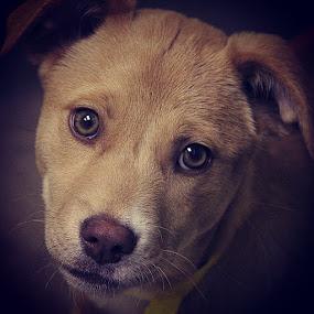 Puppy behaviour profile. by Rusty Jhorn - Uncategorized All Uncategorized ( puppies, adopt, puppy, puppy portrait, mcspca )