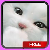 White Kitten Live Wallpaper Background Cat Theme