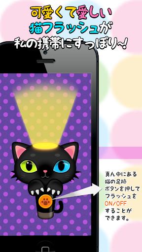 フラッシュ子猫ちゃん cat flash