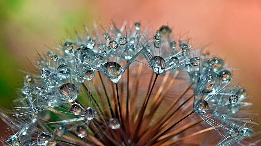 by Carlos De Sousa Ramos - Nature Up Close Natural Waterdrops (  )