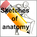 Sketches of anatomy icon