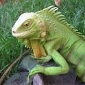 Reptiles Gallery logo