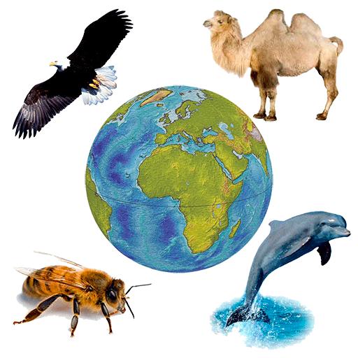 動物群響音 LOGO-APP點子