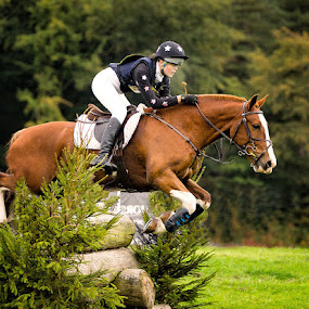 Determined by Phil Barker - Sports & Fitness Other Sports ( fence, eventing, femail rider, horse, action, cross country, brown, equestrian, jump )
