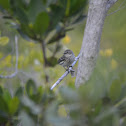 (Myrtle) Yellow-rumped Warbler - female