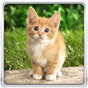 Cat Kittens Live Wallpaper icon