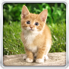 Cat Kittens Live Wallpaper icon