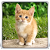 Cat Kittens Live Wallpaper file APK for Gaming PC/PS3/PS4 Smart TV