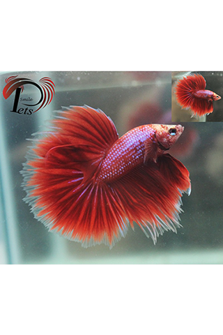 Fish betta android apps on google play for What fish are compatible with betta fish