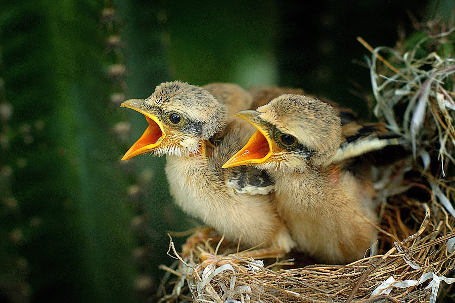 by Themoon Moon - Animals Birds