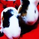 3D cute Guinea pig logo