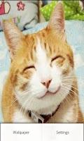 Screenshot of Emotional Cat