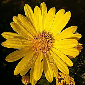 . by Debapriya Bhattacharya - Nature Up Close Flowers - 2011-2013