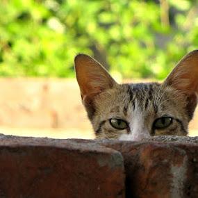 Meeaooo by Gaurav Madhopuri - Novices Only Pets (  )
