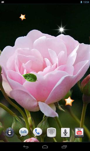 Spring Rose live wallpaper