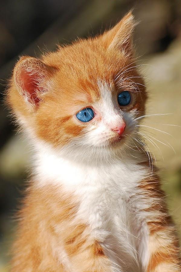 by Ivan Marjanovic - Animals - Cats Kittens