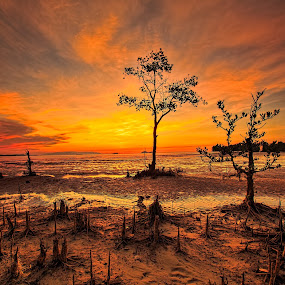 Color Dreams #3 by NC Wong - Landscapes Sunsets & Sunrises ( shore, water, clouds, sand, warm, santubong, kuching, sea, ocean, rock, beach, seascape, mangrove, coastal, swamp forest, sun, sky, sunset, swamps, golden hour )