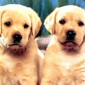 Dog Twins Puzzle icon