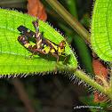 Pretty Grasshopper