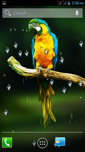 Birds HD Live Wallpaper
