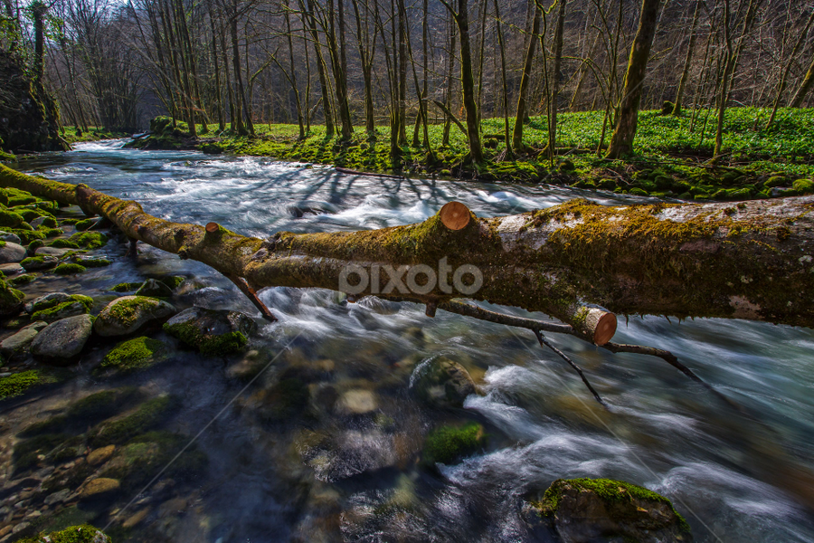 Curak - Zeleni vir by Stanislav Horacek - Landscapes Forests