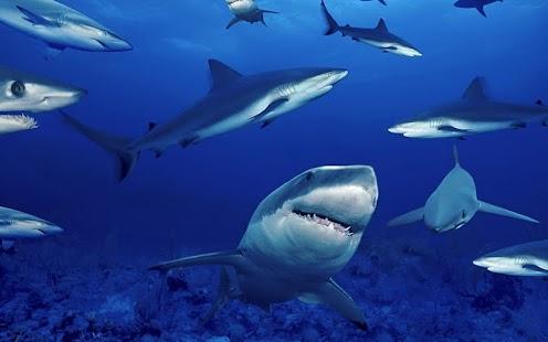 鯊魚動態壁紙
