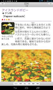 散歩で見かける四季の花