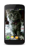 Screenshot of Cute Kitty Video Wallpaper