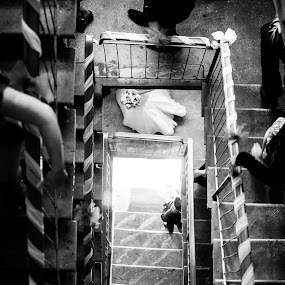 On the way by Dragos Birtoiu - Wedding Other ( stairs, photographer, bride,  )