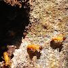 Soldier termite