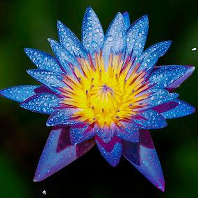 by Germzki Hitch Cardenas - Flowers Single Flower (  )