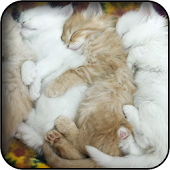Sleeping Cat Wallpapers