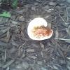 unknown mushroom (2 of 2)