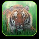 Tiger Free Video Wallpaper icon