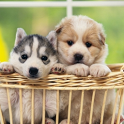 Cute Animal Wallpaper 2 icon