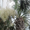 Palmetto Tree (with flowers)