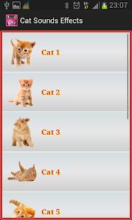 貓咪的聲音語言| 寵物百科