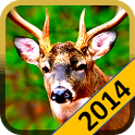 Deer Wild Hunt 2014 icon