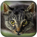 Cat Copter - the flying kitty icon