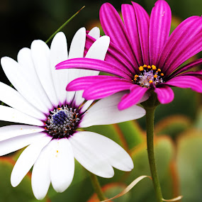 Wild Colour by Victor Queiroz - Flowers Flowers in the Wild ( flower )