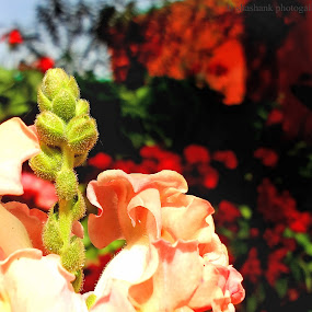 amazing life by Shashank Sharma - Nature Up Close Other Natural Objects ( macro, nature, day light, close up, flower )