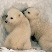 iSlider Bear Slide Puzzles